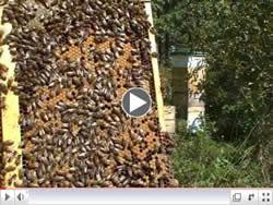 Gord and Josephine beekeeping
